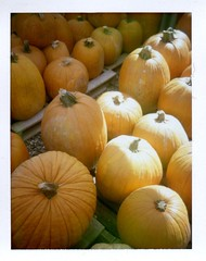 Pumpkins, Cottonwood AZ (EllenJo) Tags: polaridweek october2016 polaroid instantfilm ellenjo ellenjoroberts colorpack3 colorpack fujiinstantcolor savefujifp100c fujifp110c savepackfilm landcamera cottonwoodaz pumpkinpatch autumn october17 verdevalleyaz