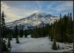 Brilliant Mt. Rainier (Ernie Misner) Tags: mountrainier mountrainiernationalpark washington paradise erniemisner nikon nik lightroom capturenx2 hoya polarizer f8andbeupthere yeti