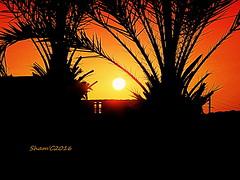 Dropping. (salsol - Sham'C ♈) Tags: sun set sunlight sol sky water ocean music beauty sunsets raphaelsaadiq stonerollin colour color nature silhouettes street palmtrees light