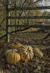 DSC_0358 thanksgiving snolic (snolic...linda) Tags: arkansas ozarkmountains ozarknationalforest fall 501 snolic