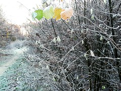 Different colours Outdoors Nature Fragility Frosty Mornings Frost Netherlands Morning Cold Temperature (markjowen66) Tags: outdoors nature fragility frostymornings frost netherlands morning coldtemperature