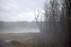 DSC_7684be (Katinka Irrlicht) Tags: mist fog forest wald river fluss baum bume trees nikon 50 mm nikkor d750