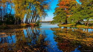 Autumn in Kralingen