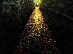 Victorian ginnel in Leeds 6 (hope2029) Tags: victorian golden light hydepark leeds west yorkshire