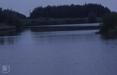 Hendre Lake, east end and corner of island, August 2003