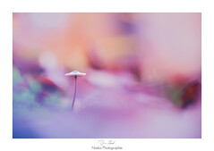 Imaginary island (Naska Photographie) Tags: naska photographie photo photographe paysage proxy proxyphoto macro macrophotographie macrophoto sweet dream reve rose pink light lumière color bokeh couleur mushroom champignon imaginaire pays island land landscape girly