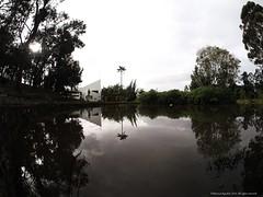Lago SMP, Sonsn. (Explore 28 nov 2016) (Ivan Mauricio Agudelo Velasquez) Tags: lago lake lage agua palma tree arbol parque park antioquia colombia paisaje building edificio sonson