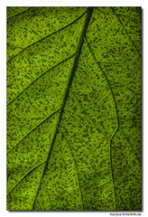 Mosak Nature (Maryline ROHER) Tags: nature feuille details mosaque