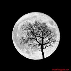 Supermoon in October 2016 (W.O.W. Images) Tags: 2016 alberta fullmoon kleskunhills moonrise peacecountry photographerlloyddykstra supermoon wowimages