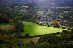 Illuminated field (Modesto Vega) Tags: autumn d600 field fullframe grass green illuminatedfield landscape nikon nikond600 outdoor surrey surreyfield tree