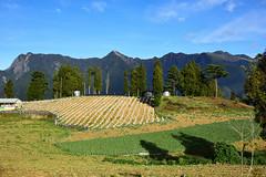 DSC_2478 (cloudrick) Tags: 福壽山農場 梨山 楓葉