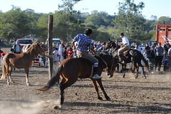 DSC_0607 (jaramillosergio) Tags: criollo caballos gauchos norte humahuaca jujuy doma gauchas jineteada sanpedrodejujuy montas gauchaje