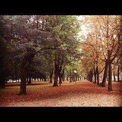 (ilana emer) Tags: autumn trees red orange green grass leaves yellow deutschland europe bonn herbst nrw nordrheinwestfalen baume bonnuniversity bonngermany bonnuniversiät