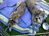GreyhoundPlanetDaySept132009009