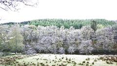DSCN0605GPc16x9:Brt100:Shdw100:HiLt-100:WhtPnt21:BlkPnt100:WhtBalAuto:Shpn100:LA-100: (unclebobjim) Tags: winter panorama woodland scotland highlands false treatment 16x9 greatphotopro