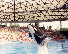 SeaWorld (Tejas Cowboy) Tags: park water photo san texas tx scan killer scanned theme whale orca antonio seaworld