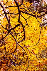IMG_1148 (moutoons) Tags: fruit jaune automne rouge eau couleurs rivière pont porte nuage gorges tarn marron cascade arbre château champignon brume verte pomme croix feuille poire légume quézac lozère cévennes coing ispagnac