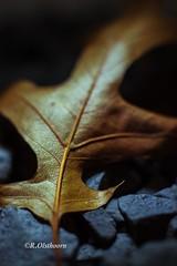 Autumn 2013 (R Olsthoorn) Tags: autumn leave herfst