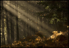 Light (aledue) Tags: wood trees light alberi soe luce bosco nikond80 flickraward platinumheartaward aledue mygearandme mygearandmepremium mygearandmebronze mygearandmesilver mygearandmegold mygearandmeplatinum mygearandmediamond ringexcellence dblringexcellence tplringexcellence eltringexcellence