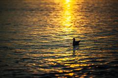 Left Floating. (Crusade.) Tags: uk sunset sea england canon brighton 70200f28 5d2
