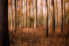 Autumn Movement (rosejones1uk) Tags: autumn trees light blur trunks icm intentionalcameramovement vision:outdoor=0649 vision:street=0777