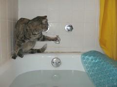 The Wall Crawler (elycefeliz) Tags: wall cat bathroom yoda gato faucet acrobat bathtub katze yoyo friendsofzeusphoebe vision:text=064