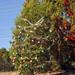 Trees_of_Loop_360_2013_262
