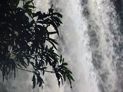 Iguazu 091 (molaire2) Tags: argentina argentine brasil toucan bresil selva waterfalls iguana tres paraguay iguazu foz brsil chutes iguane tucan coati iguau guarani fronteras