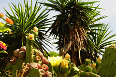 Cactus Garden! ('cosmicgirl1960' NEW CANON CAMERA) Tags: travel flowers nature gardens spain holidays parks costadelsol andalusia marbella yabbadabbadoo worldflowers