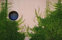 Crawling Plant (Joel Bramley) Tags: plant window nature wall circle alive crawling