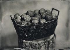 Walnuts (lost in pixels) Tags: walnut ambrotype wetplate vds tessar collodion 13x18 wetplatecollodion sprencbalazs vdscamera