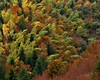 bowed trees Romania (ochils) Tags: outstandingforeignphotographersvisitingromania