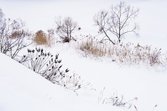 Winter trail (withcamera) Tags: morning winter plants mountain snow abstract nature water weather rural landscape nikon pattern wind korea trail configuration valleys