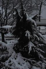 Torino sotto la neve (Morgause666) Tags: italy snow torino italia eu piemonte neve neige turin piedmont italie piemont augustataurinorum pimont trn euroregionealpimediterraneo eurorgionalpesmditerrane alpmed