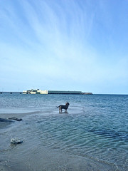 Early bather (Sundaybrunch Photography) Tags: beach beautiful elvis dachshund wirehaired tax malm teckel dogbeach wirehaireddachshund ribban ribersborg kallbadhuset dachshound