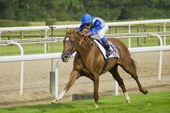 Baraain (katamotza22) Tags: de caballos san minolta baraain soy 300 alpha 75 77 turf donostia carrera sebastin gana hipdromo galope lasarte hipodromoa