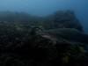 grey nurse (ce2de2) Tags: ocean fish shark underwater diving scubadiving reef byronbay greynurseshark visibility1012m