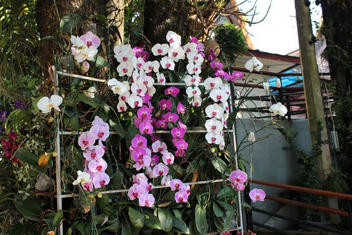 09032014 Doi Suthep Chiang Mai (1)