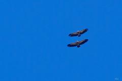 jocou-8667 (verolauro) Tags: alpesdehauteprovence brume diois drome fuji jocou provence vaucluse vautours vercors veroniquelaurolillo