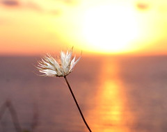 peaceful (Giuliana_V) Tags: calabria italia flower sun sunset beautiful red orange pretty sky pink nature clouds horizon gorgeous warm view allsunsets