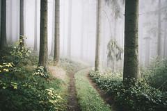 We can get along (explore) (desomnis) Tags: forest woods woodland trees wood nature naturephotography fog mist misty foggy haze desomnis canon6d bhmerwald bohemianforest mhlviertel austria upperaustria obersterreich sterreich mystical mystic autumn autumncolors autumnfoliage bokeh sigma35mm sigma35mmf14dghsmart