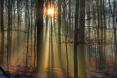 Herbststimmung mit leichtem Bodenfrost (oblakkurt) Tags: herbst nebelstimmung sonnenstimmungen wald bume