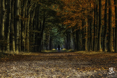 The Walk, (Tristan Roebersen) Tags: roebersen 70d troebersen canon tristaan tristan walk the forest autumn leaves afternoon color red green tree yellow orange eerde landgoed ground brown walking people spot