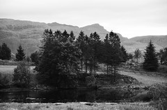 Remake (-Kj.) Tags: nordfjord almenningen summer trees pond remake bw