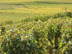 DSCN8132 (keepps) Tags: switzerland suisse schweiz fall autumn vaud aigle vineyard vine grapes