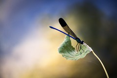 #macro_photography #nature #insects (salam.jana) Tags: macrophotography nature insects