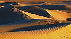 Marocco. Alba dorata sulle Dune di M'Hamid. (BORGHY52) Tags: marocco deserto dune mhamid alba ombre luci sabbia paesaggio landscape sahara solco solchi duna allaperto africa dunedimhamid luciedombre