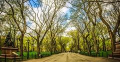 Walking through Central Park. (The Sergeant AGS (A city guy)) Tags: newyork unitedstates 2015 centralpark earlyinthemorning exploration sonya6000 sonylens sony walking walkways sonyselp18105g best