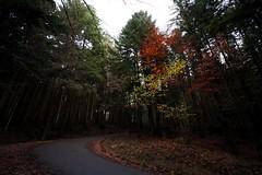 Camaldoli / Toscana (Cristianella) Tags: camaldoli forest toscana tuscany woods foresta alberi trees autumn autunno