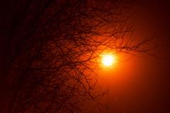 _DSF1113 (Cagey75) Tags: helios 442 manual focus fuji xt1 november